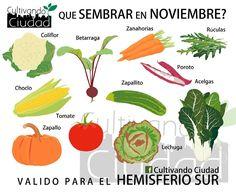 qué sembrar en noviembre