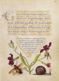 Joris Hoefnagel »« Flemish Illustrator »« 16th Century »« via Dutilleux Ludovic on Facebook