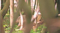 Diese Wölfin wurde in Ohrdruf, nur gut 35 Kilometer vom Tatort entfernt…