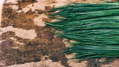 Growing Chives Indoors - Herb Gardening Tips - The Indoor Gardens Healing Herbs, Medicinal Herbs, Container Gardening, Gardening Tips, Indoor Gardening, Deer Repellant, Garlic Chives, Grow Chives, Gardens