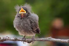 Cute Baby Birds | baby bird