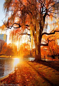 #autumn landscape...amazing!