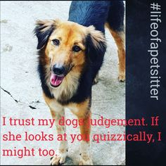 I trust my dogs judgement. If she looks at you quizzically, I might too.  #dogtalk #lifeatpetsitters #petsitters #lifeofapetsitter #woofwords  Thank you for connecting with us. You can now be in touch with us thru facebook www.facebook.com/petsitters.pune and also our blog www.petsitterspune.wordpress.com to know on what we are upto.  For booking a place for your pet, pls send a mail to shalaka@petsitters.co.in  Cheers, Shalaka Mundada PetSitters