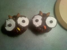 owls up close
