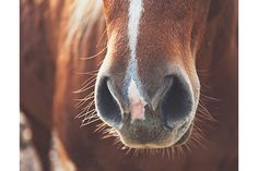 Heart of the Horse by Christina Devey on Etsy. Items collected from Etsy presented to you in a picture list. Horses, Cowboy, Cowgirl, Country, Western Home Decor, Rustic