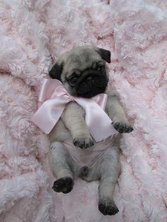 pink pug