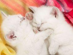 I love...Kitten