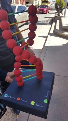 Maqueta de la estructura del ADN.
