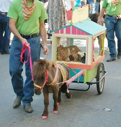 A circus pony, with a wagon of baby goats.