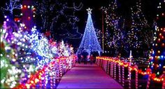 Not sure where this is, but is very pretty!  winter wonderland - Google Search