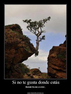 Si no te gusta donde estás - Muévete! No eres un árbol...