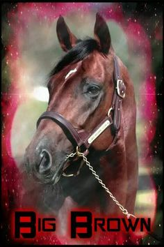 Big Brown: sired by Boundary. Grandsires are Nureyev and Danzig Beautiful Horses, Beautiful Babies, Triple Crown Winners, Nureyev, All About Horses, Big Brown, Danzig, Thoroughbred Horse, Derby Party