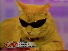 Cool for cats on CATURDAY.