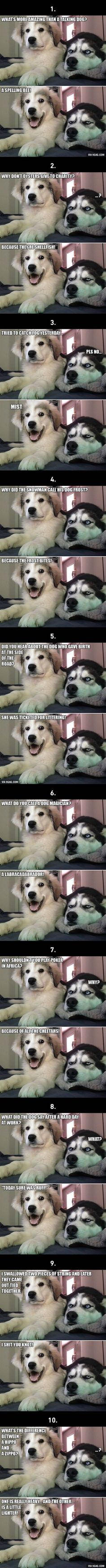 """Viral pictures of the day: 10 Best """"Bad Puns Dog"""" Memes Ever"""