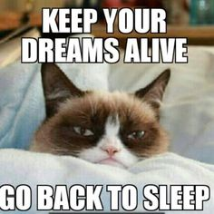 #GrumpyCat #meme Grumpy Cat meme on www.pinterest.com/erikakaisersot