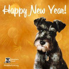 Happy New Year, Dogs, Animals, Animales, Animaux, Pet Dogs, Doggies, Animal, Animais