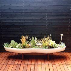 // Dwell Home Venice by Kiesel Design - Landscape Architecture