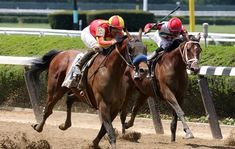 Hoppertunity with Flavien Plat up wins the 2018 Brooklyn Invitational for Trainer Bob Baffert and owner Pegram, Watson, Weitman, at Belmont Racetrack in Elmont NY June 2018 Race Horses, Horse Racing, Bob Baffert, Bay Horse, Sport Of Kings, Thoroughbred, Athletes, Brooklyn, June