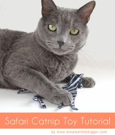 Safari Catnip Toys Tutorial and Pattern. Zebra, cheetah and tiger all made cuter with animal print felt!