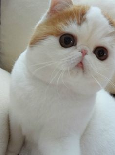 Snoopy cat is so adorable!  I am a little bit obsessed with this him.
