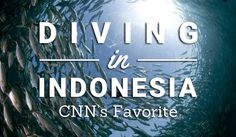 Diving In Indonesia: CNN's Favorite