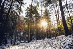 Sunlight through the trees on a crisp winter day, courtesy Keith Walters Photography.