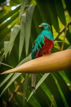 Green Wing, Vertebrates, Bird Feeders, Habitats, Birds, Animals, Animales, Animaux, Bird