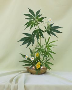 Broccoli Mag  Seeking Arrangement — Weed ikebana in full flower. Floral design by Amy Merrick, Photographs by Anja Charbonneau.