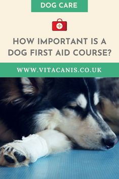 Are You Ready for a Dog Emergency? | Dog Health Tips & Dog Care - Are you a dog owner? Have you ever thought about how to perform CPR on a dog or even how to save a dog from dying? Dog first aid is so important! Click here to find out why. Vita Canis | first aid for dogs | first aid for pets | dog first aid what to do | dog health tips | dog warning signs | dog health care #dogs #doghealth #dogcare
