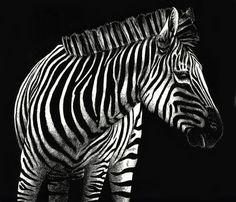 Zebra scratchboard art by Kerian Babbitt Massey