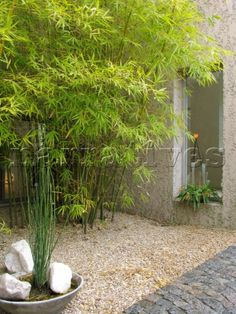 images about Inner Courtyards on Pinterest