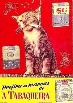 cat smoking a cigarette - advertisement