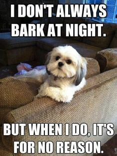 101 Best Funny Dog Memes to Make You Laugh All Day - Funny Dog Quotes - 101 best funny dog memes I don't always bark at night. But when I do it's for no reason. The post 101 Best Funny Dog Memes to Make You Laugh All Day appeared first on Gag Dad. Dog Quotes Funny, Funny Animal Memes, Animal Quotes, Funny Dogs, Cute Dogs, Funny Animals, Cute Animals, Funny Memes, Funny Puppies