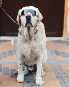 No hay nadie más feliz que este perrito con sus gafas de sol. El mismo nos posó para esta foto mientras caminabamos por las calles de Pamplona Norte de Santander  #Pamplona #TravelBloggers #Travel #Blogger #CiudadesySabores #IgersBogota #IgersColombia #Igers #instatravel #ComuViajera #blogdeviajes #bloggers #Art #Dog #dogsofinstagram #doggy #pet #animal by ciudadesysabores