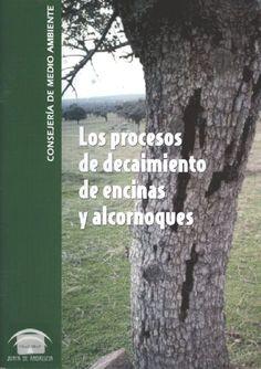 La seca de encinas y alcornoques en Andalucía