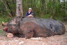 Hog Hunting Gone Wrong - Wild Hogs Will Get You.