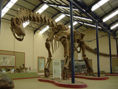 Brief introduction to Paleobiology of South American titanosaurs.
