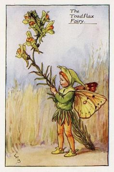 The TOADFLAX Fairy ~ Cicely Mary Barker ~