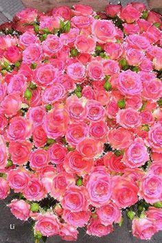 Roses - אנימציה טלפון №1384613