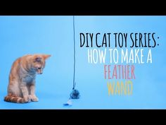 Welcome to the Friskies Do-It-Yourself Toy Maker Series! Watch this video to learn how to make a Feather Wand your cat will absolutely adore. Diy Cat Toys, Pet Toys, Cat Tent, Clumping Cat Litter, Cat Vs Dog, Super Cat, Cat Drinking, Owning A Cat, Kitten Gif