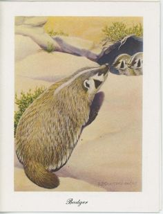 VINTAGE BADGER WEASEL MOTHER BABY KIT CUBS CUTE ADORABLE NOTECARD ART PRINT