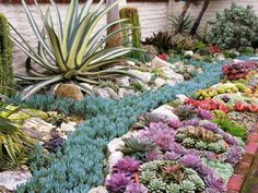 Succulents – Ideal Plants for Summer- See more at: http://worldofsucculents.com/succulents-ideal-plants-for-summer