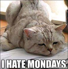 i hate mondays funny blog cats