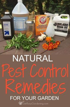 Don't reach for chemical pesticides to control bugs in your garden; they do more harm than good! Use natural pest control remedies, and work WITH nature!
