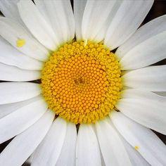 Encore et encore des fleurs, vive l'#été ! #coaching #summer #marguerite #nature #normandie #coach #personnality #image #photographer #blogger #blog #instaflowers #saison #look #lifestyle #businesswoman #colorimetrie #ligne #forme #motivation