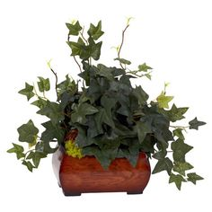 Nearly Natural Puff Ivy Desk Top Plant in Chest   Wayfair ($34 with disct)