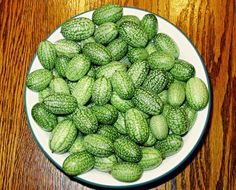 """One of my customers calls these """"Fairy Watermelons"""" - it's easy to see why. Mexican Sour Gherkin Cucumbers are tiny little cukes that have a slightly pickled taste. A great way to perk up your salad!"""