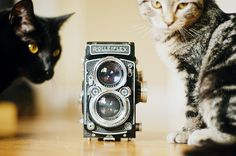 kitties and cameras