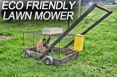 Homestead Survival, Riding Mower, Humor Mexicano, Great Inventions, Facebook Humor, Back Gardens, Pet Shop, Lawn Mower, Organic Gardening