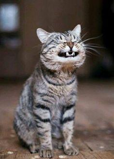 ahahahahahah make me smile!!!
